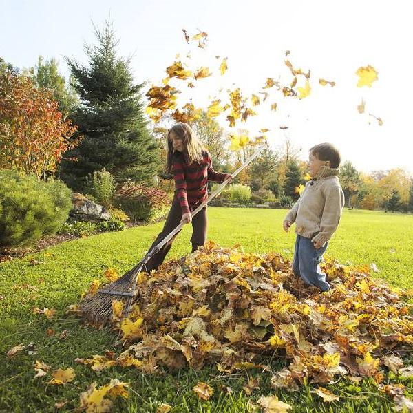 جمع آوری برگ در فصل پاییز
